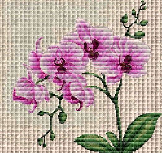 Вышивки схемы с орхидеями