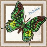 Набор для вышивки бисером на прозрачной основе Бабочка Тейнопальпус императорский