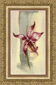 Набор для частичной вышивки крестом Лиловая орхидея, , 256.00грн., РК-111, Чарiвна мить (Чаривна мить), Цветы