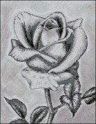 Схема вышивки бисером на габардине Роза