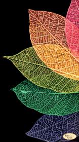 Схема для вышивки бисером на атласе Радужный веер Tela Artis (Тэла Артис) ТА-413 - 98.00грн.