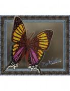 Набор для вышивки бисером на прозрачной основе Бабочка Марпезия Марселла