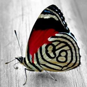 Набор для выкладки алмазной мозаикой Яркая бабочка