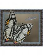 Набор для вышивки бисером на прозрачной основе Бабочка Харакс Нобилис
