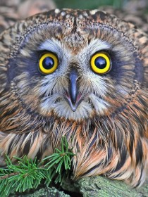 Набор для выкладки алмазной мозаикой Глазастая сова
