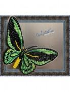 Набор для вышивки бисером на прозрачной основе Бабочка Птицекрыл Приам