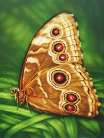 Набор для выкладки алмазной мозаикой Бабочка Монарх