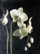 Набор для выкладки алмазной мозаикой Цвет орхидеи