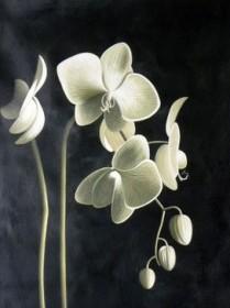 Набор для выкладки алмазной мозаикой Цвет орхидеи Алмазная мозаика DM-115 - 640.00грн.