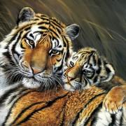 Набор для выкладки алмазной мозаикой Нежность тигрицы