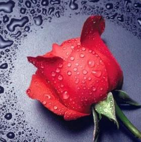 Набор для выкладки алмазной мозаикой Красная роза Алмазная мозаика DM-005 - 255.00грн.