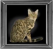 Набор для вышивки крестом Бенгальская кошка