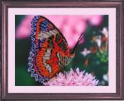 Рисунок на атласе для вышивки бисером Бабочка