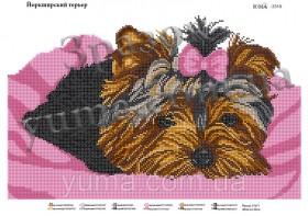 Схема вышивки бисером на атласе Йоркширский терьер  Юма ЮМА-3319 - 61.00грн.