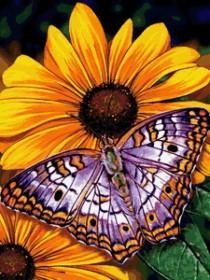 Набор для выкладки алмазной мозаикой Бабочка на цветах