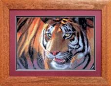 Тигр Чарiвна мить (Чаривна мить) 469