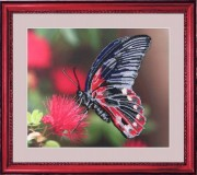 Набор для вышивки бисером Бабочка